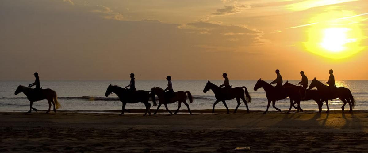 paardensport friesland